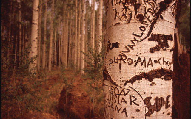 Image: A tree which has had words carved into it.