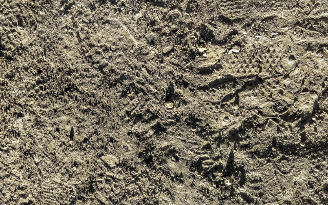 Image: A photograph of footprints in the dirt.