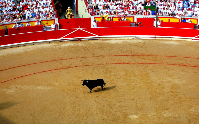 Image: A bull in the center of a bullfighting ring.