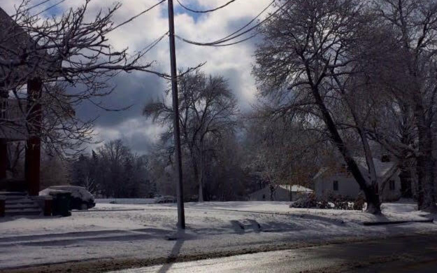 Image: A snowy view of a yard and trees.
