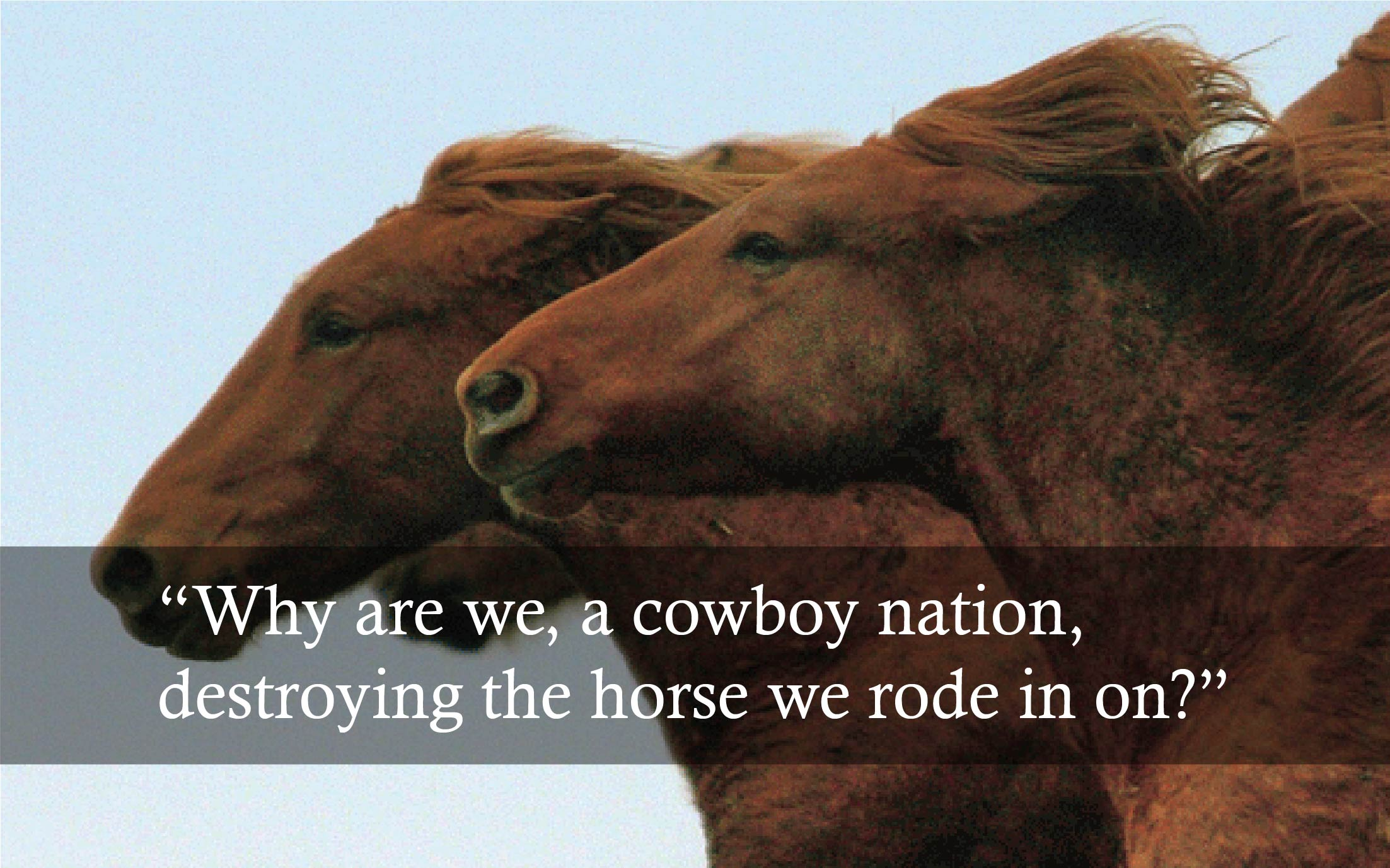 "Test over horses reads, ""what are we, a cowboy nation, killing the horses we rode in on."